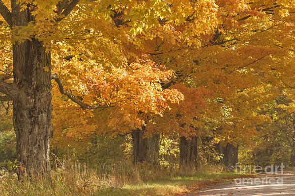 Photograph - A Time For Maples by Charles Kozierok