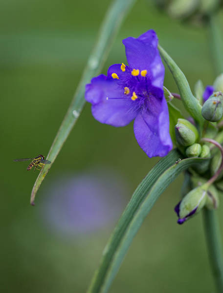 Photograph - A Tiny Visitor by Dale Kincaid