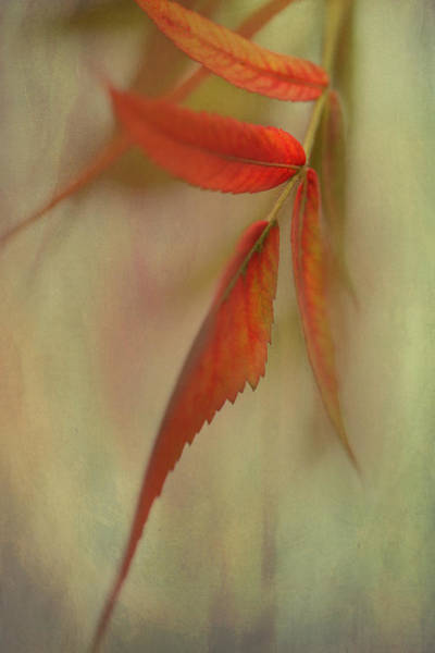 Photograph - A Touch Of Autumn by Annie Snel