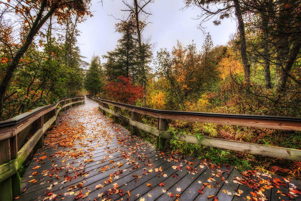 Labrador Photograph - A Touch Of Fall by Everet Regal