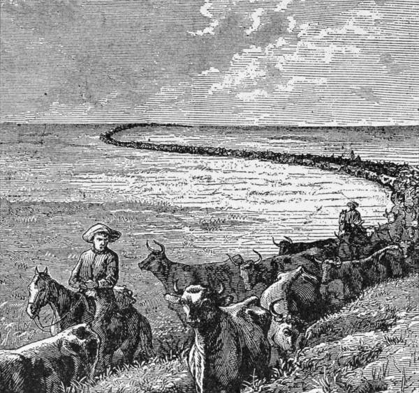 Herd Drawing - A Trail In The Great Plains, Illustration From Harpers Weekly, 1874, From The Pageant Of America by American School