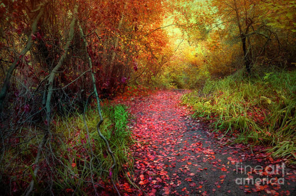 Photograph - A Trail Of Fallen Leaves by Tara Turner