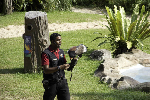 Jurong Bird Park Photograph - A Trainer And A Large Bird Of Prey At A Show Inside The Jurong Bird Park by Ashish Agarwal