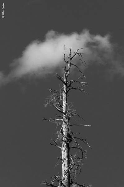 Photograph - A Tree And A Cloud by Alexander Fedin