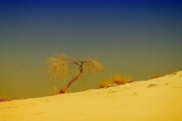 Living Things Photograph - A Tree At White Sands by Jeff Swan