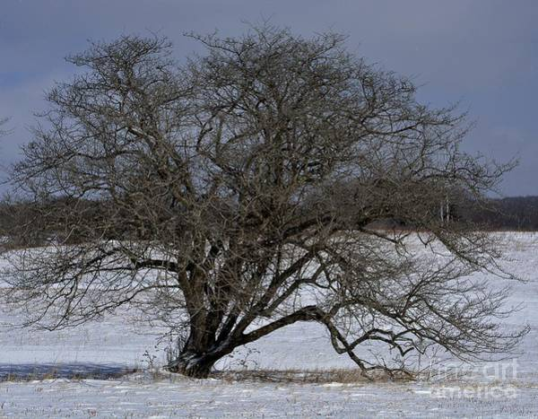 Wall Art - Photograph - A Tree In Canaan 2 by Randy Bodkins