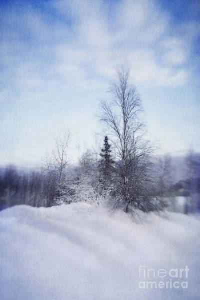 White Birch Trees Wall Art - Photograph - A Tree In The Cold by Priska Wettstein