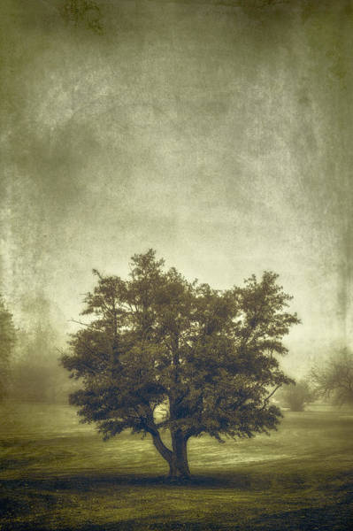 Green Grass Photograph - A Tree In The Fog 2 by Scott Norris