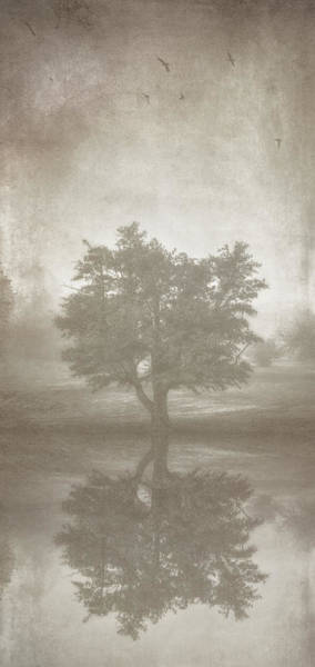 Manipulation Photograph - A Tree In The Fog 3 by Scott Norris