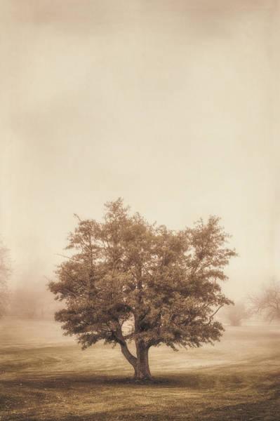 Green Grass Photograph - A Tree In The Fog by Scott Norris