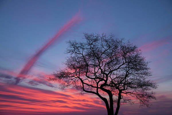 Wall Art - Photograph - A Tree On Masons Island In The Mystic by Michael Melford