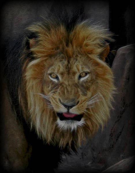 Mountain Lion Digital Art - A Tribute To Elson Reworked by Ernie Echols