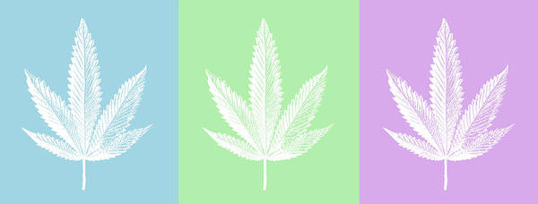 Wall Art - Photograph - A Triptych Of Colored Cannabis Leaves by Stock Pot Images