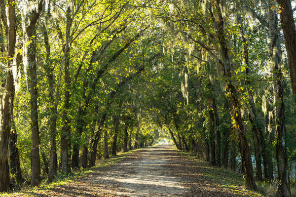 Wall Art - Photograph - A Tunnel Of Trees Along Alligator Swamp by Ellie Teramoto