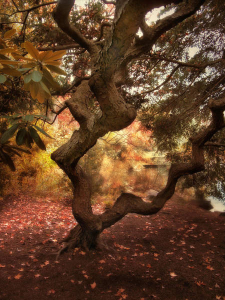 Arbor Photograph - A Twisted Tree by Jessica Jenney
