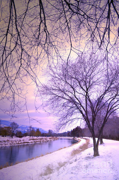 Photograph - A Veil Of Branches by Tara Turner