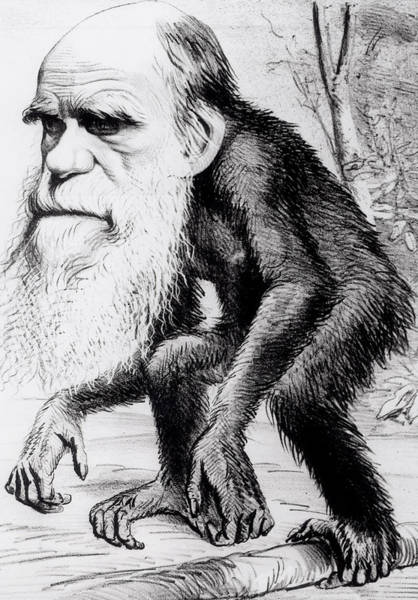 Evolution Painting - A Venerable Orang Outang by English School