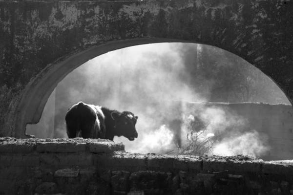 Photograph - A Very Mooooody Time by Barry Weiss