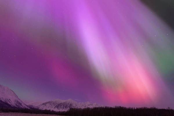 Boreal Forest Photograph - A Vibrant Display Of Aurora Borealis by Hugh Rose