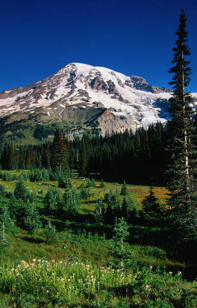 A View Of Mt Rainier From Somewhere Art Print