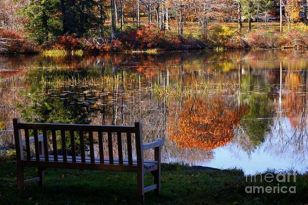 Photograph - A View Of Wonder by Marcia Lee Jones