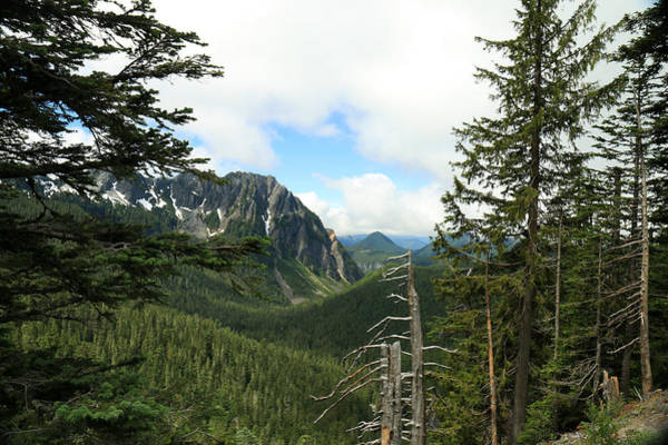 A Vista - Mt. Rainier National Park Art Print