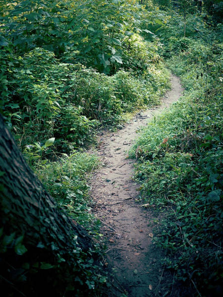 Bethesda Photograph - A Walk Alone by Cameron Davidson