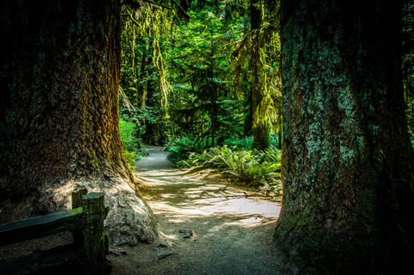 Photograph - Pathway Cathedral Grove by Roxy Hurtubise