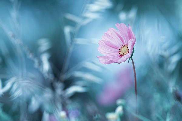 Macro Photograph - A Walk In Dreamland by Fabien Bravin