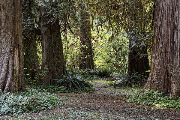 Photograph - A Walk In Eagle Fern Park by Wes and Dotty Weber