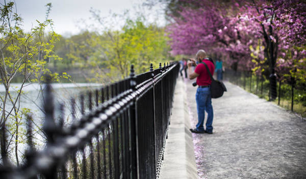 Wall Art - Photograph - A Walk In The Park by Chris Halford