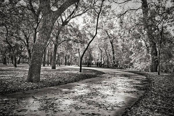 Photograph - A Walk In The Park by Darryl Dalton