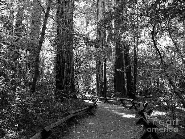 Photograph - A Walk In The Woods Bw by Mel Steinhauer