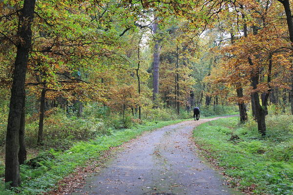 Sestroretsk Photograph - A Walk Through The Forest by Christine Rivers