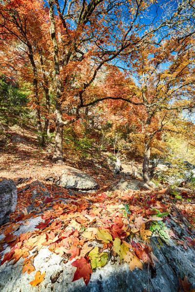 Photograph - A Walk Through The Maple Trail by Silvio Ligutti