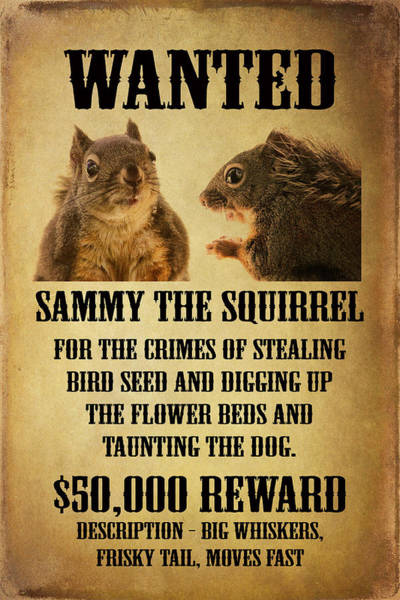 Photograph - A Wanted Squirrel by Peggy Collins