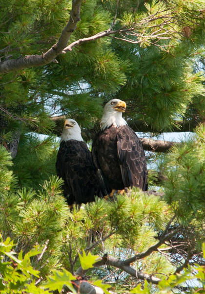 Photograph - A Watchful Pair by Brenda Jacobs