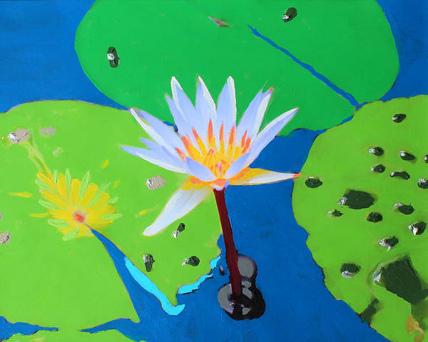A Water Lily In Its Pad Art Print