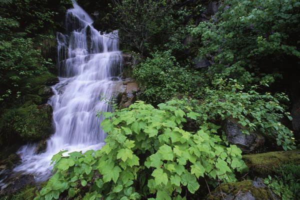 North Idaho Photograph - A Waterfall by Jose Azel
