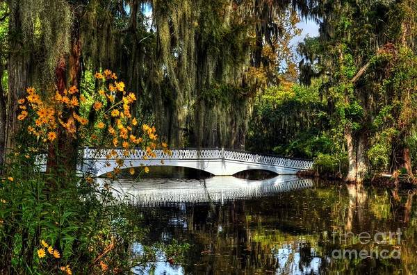 Photograph - A White Bridge 3 by Mel Steinhauer