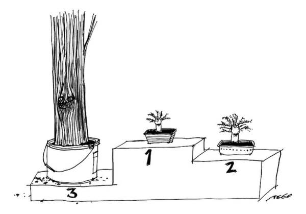 Tree Drawing - A Winner's Podium That Features Three Plants by Edward Steed