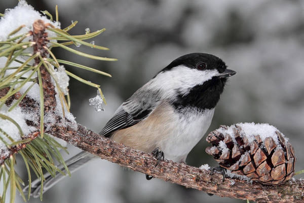 Photograph - A Winter Perch by Theo