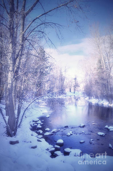 Photograph - A Winter Reverie by Tara Turner