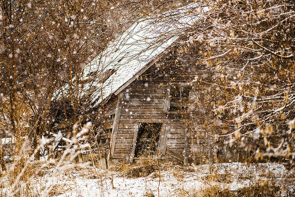 A Winter Shed Art Print