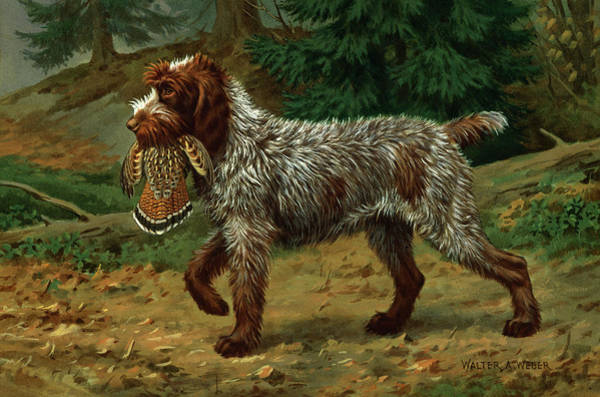 Wall Art - Photograph - A Wire-haired Pointing Griffon Holds by Walter A. Weber
