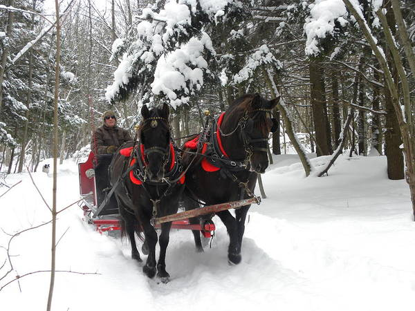 Photograph - A Wonderful Day For A Sleigh Ride by Peggy  McDonald
