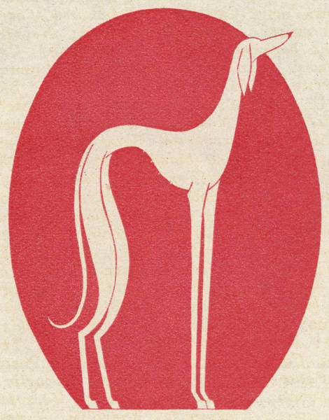 Saluki Drawing - A Wonderfully Exaggerated Depiction by Mary Evans Picture Library