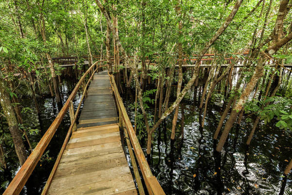 James River Photograph - A Wooden Walkway At A Jungle Lodge by James White
