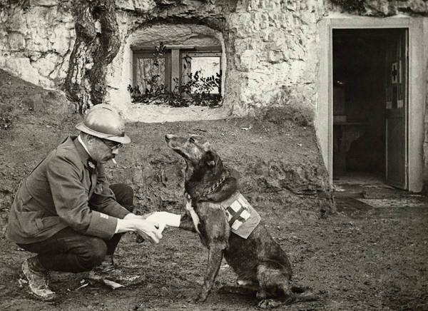Photograph - A Wwi Allied Soldier Bandages The Paw by Harriet Chalmers Adams