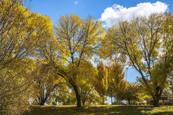 Photograph - A Yellow Day by Edward Peterson